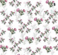 Thistle wrapping paper